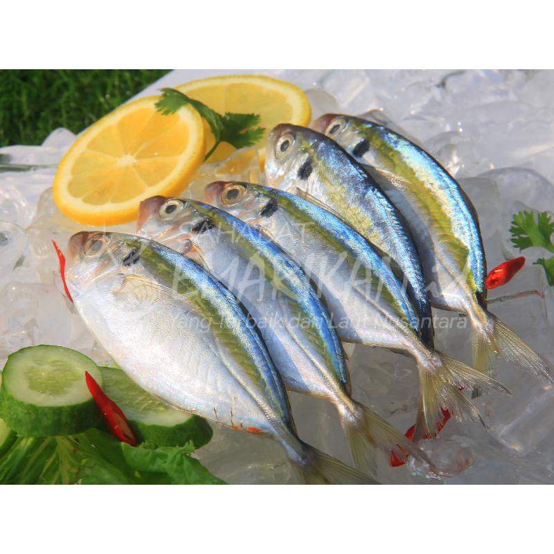 Ikan Selar Segar